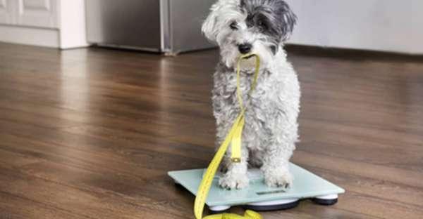 proCani-Frischfutter-Hunde-Uebergewicht-Diaet-min