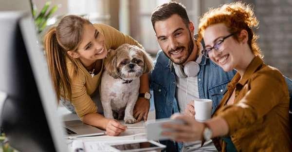 proCani-Magazin-Hunde-im-Buero
