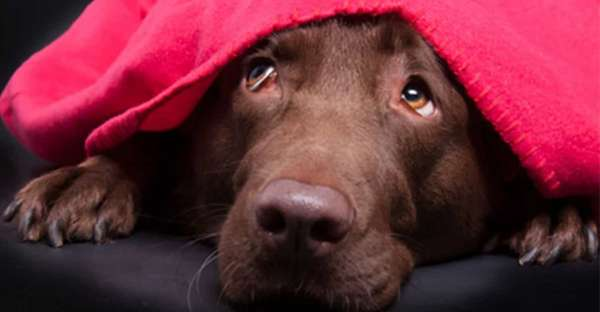 proCani-Frischfutter-Hunde-Tipps-Silverster-Angst-min