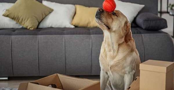 proCani-Frischfutter-Hunde-Beschaeftigung-Indoor-zu-Hause-min