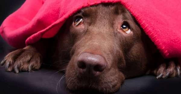 proCani-Frischfutter-Hunde-Ist-mein-Hund-gestresst