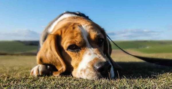 proCani-Frischfutter-Wie-sehen-Hunde-min