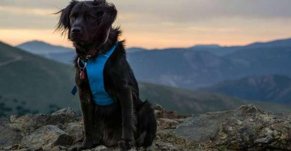 proCani-Magazin-Wie-finde-ich-das-richtige-Hundegeschirr