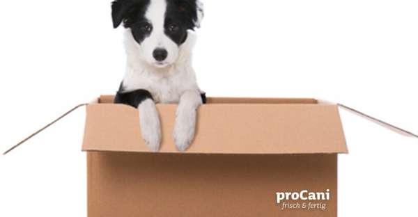 proCani-Frischfutter-Hunde-DHL-Versand-Infos
